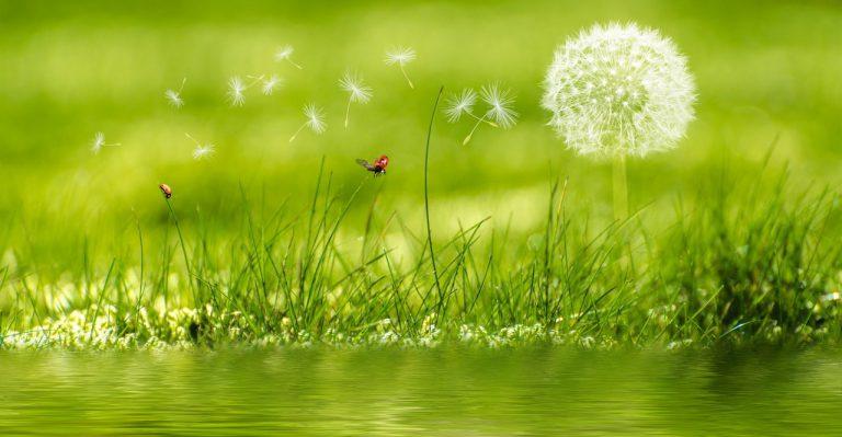 Zakładanie zieleni – czy ogranicza nas przestrzeń?