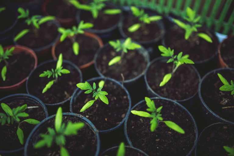Pielęgnacja zieleni – zakładanie trawnika