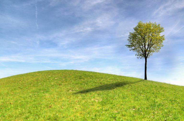 Pielęgnacja zieleni – jak i kiedy kosić trawnik?